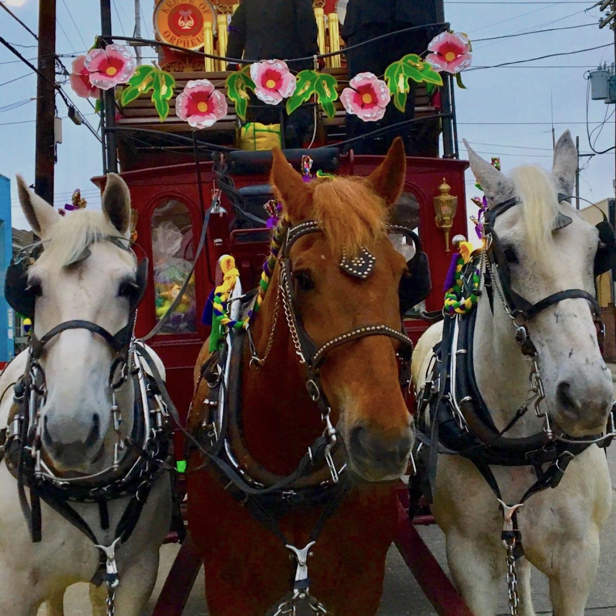 13a2d81ff2c 2019 Theme   Throw Updates  What s New With Your Favorite Krewes ...